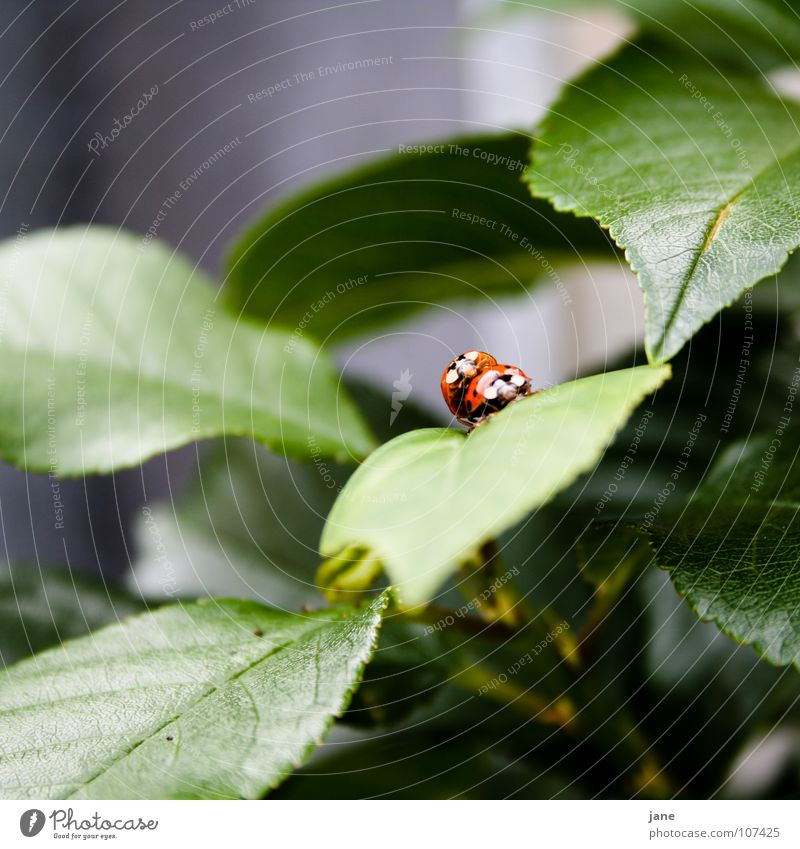 Green Red Summer Black Animal Spring Point Ladybird Shoot