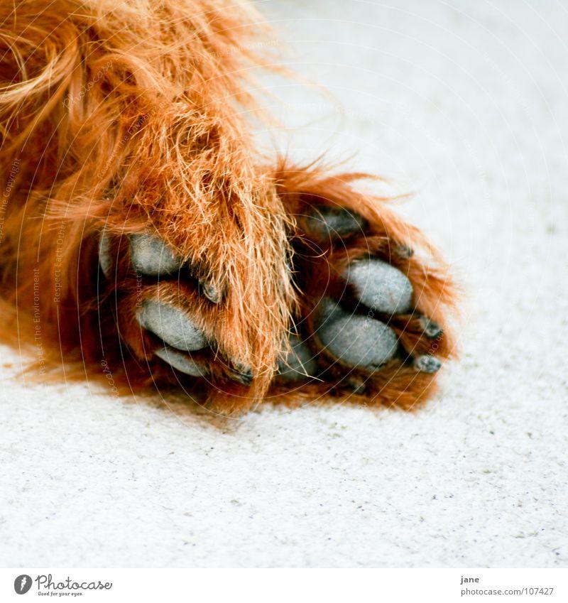 Hand White Black Animal Relaxation Emotions Dog Brown Sleep Paw