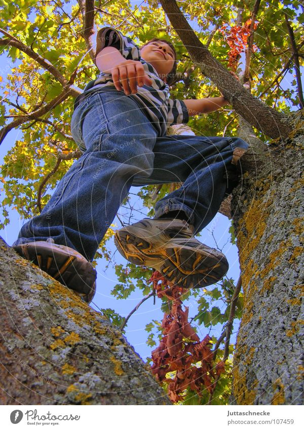 high up Boy (child) Child Tree Climbing Tall To fall Treetop Leaf Autumn Playing Contentment Image (representation) Completed Joie de vivre (Vitality) Under