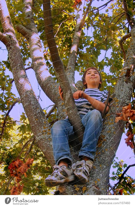 yes Boy (child) Child Tree Climbing Tall To fall Treetop Leaf Autumn Playing Contentment Image (representation) Completed Joie de vivre (Vitality) Under