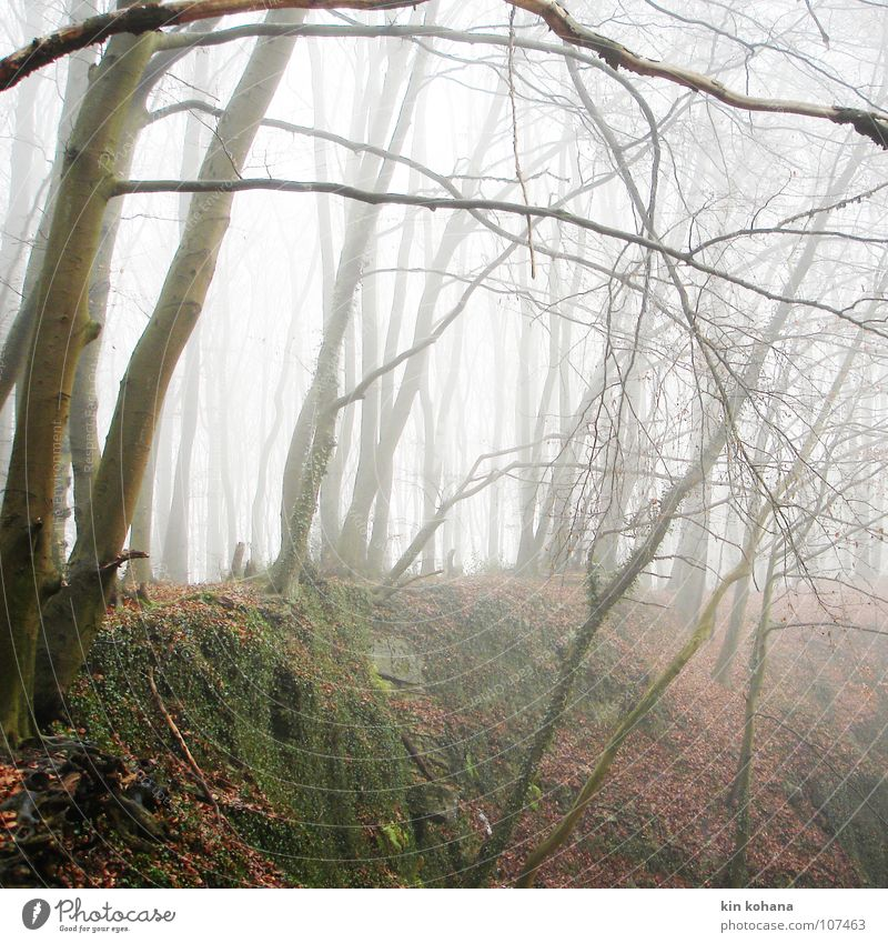 abysmal Calm Autumn Bad weather Fog Tree Ivy Leaf Forest Rock Cold Power Grief Loneliness Distress Transience Exit route Quarry Damp Force Deep project in