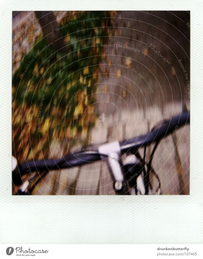 before falling... Bicycle Black Driving Leaf Grass Tree Autumn Yellow Green Brown Bicycle handlebars Brakes Metal Silver Cobblestones Lanes & trails Street