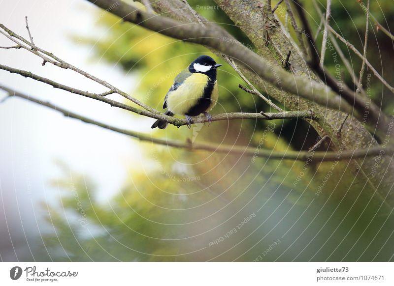 Nature Green Animal Winter Yellow Autumn Spring Natural Happy Small Garden Bird Wild animal Sit Success Wait