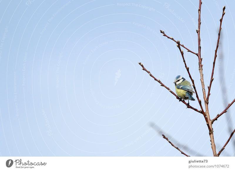 Sky Nature Blue Beautiful Tree Animal Environment Yellow Spring Happy Small Garden Bird Wild animal Free Observe