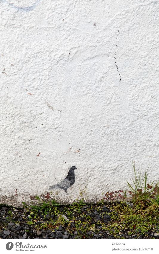 dove Grass Meadow Wall (barrier) Wall (building) Pigeon 1 Animal Graffiti Gray Green White Loneliness Discover Environment Colour photo Exterior shot Detail