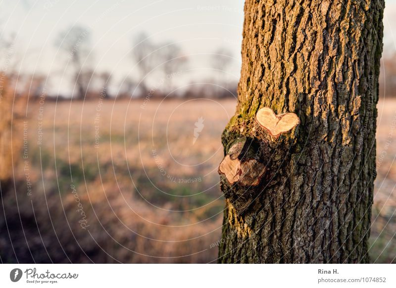 Nature Tree Landscape Winter Emotions Love Meadow Natural Horizon Branch Beautiful weather Tree trunk Sincere
