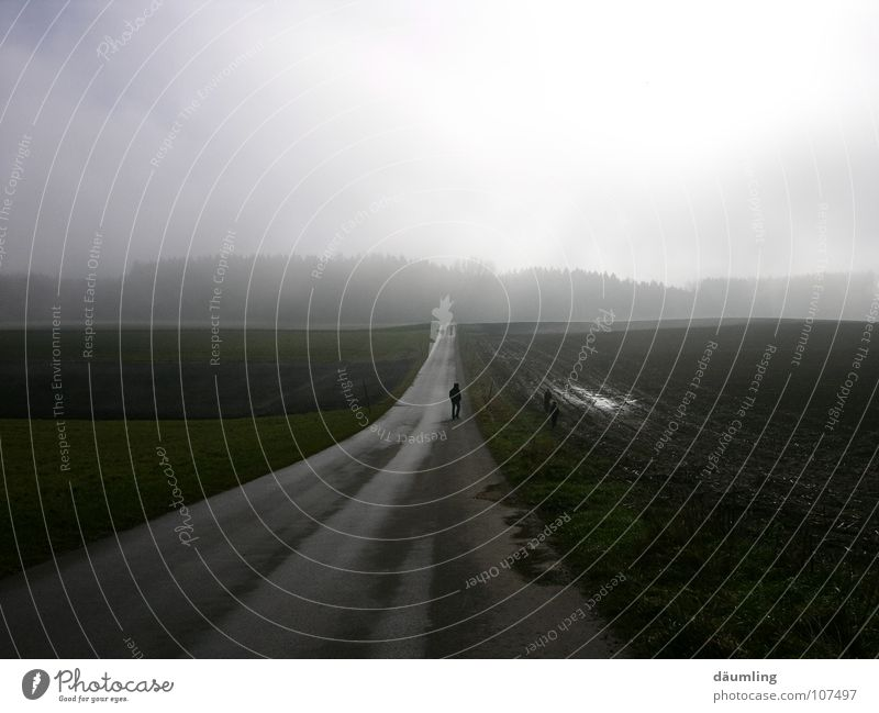 Calm Autumn Lanes & trails Field Fog To go for a walk Ambiguous