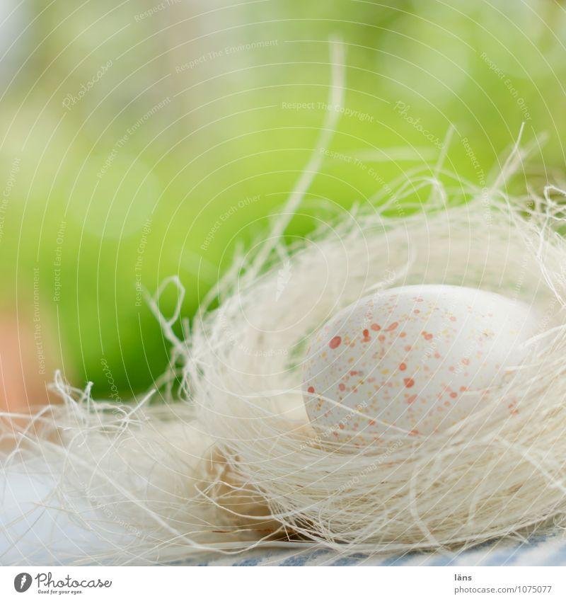 Green Spring Lifestyle Lie Decoration Beginning Safety Easter Kitsch Discover Egg Spring fever Odds and ends Eggshell