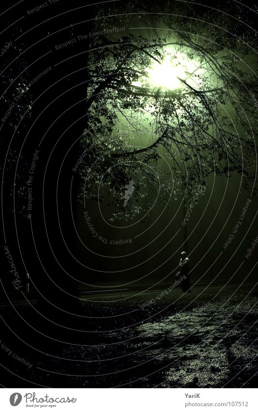 Human being Man Water Tree Green Leaf Loneliness Street Dark Cold Meadow Sadness Lighting Fear Wait Fog