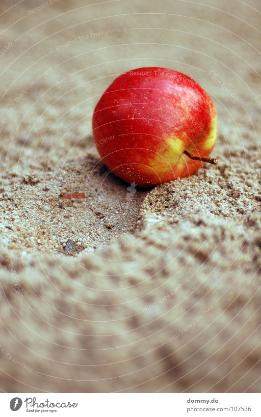the apple falls ... Red Green Small Macro (Extreme close-up) Round Tracks Depth of field Delicious Chimney Nutrition Sandpit Playground Playing Fruit Apple