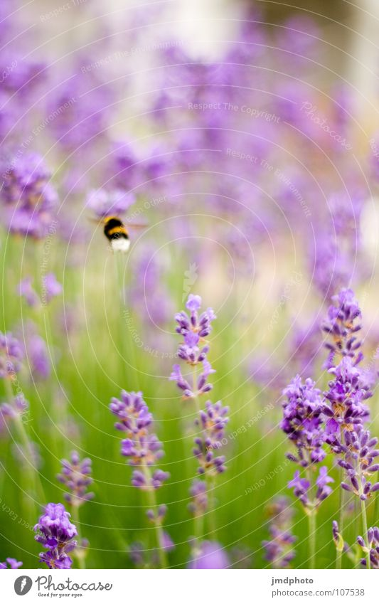 Nature Green Beautiful White Summer Flower Animal Environment Happy Blossom Bright Flying Happiness Violet Insect Depth of field