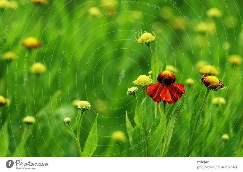 Nature Beautiful Flower Green Plant Red Summer Joy Loneliness Meadow Blossom Spring Garden Park Growth Multiple