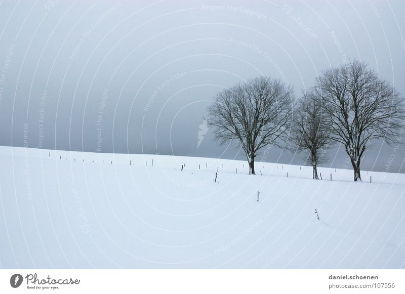 Christmas card 4 Tree Winter Black Forest White Deep snow Hiking Leisure and hobbies Vacation & Travel Background picture Snowscape Horizon Loneliness Cold
