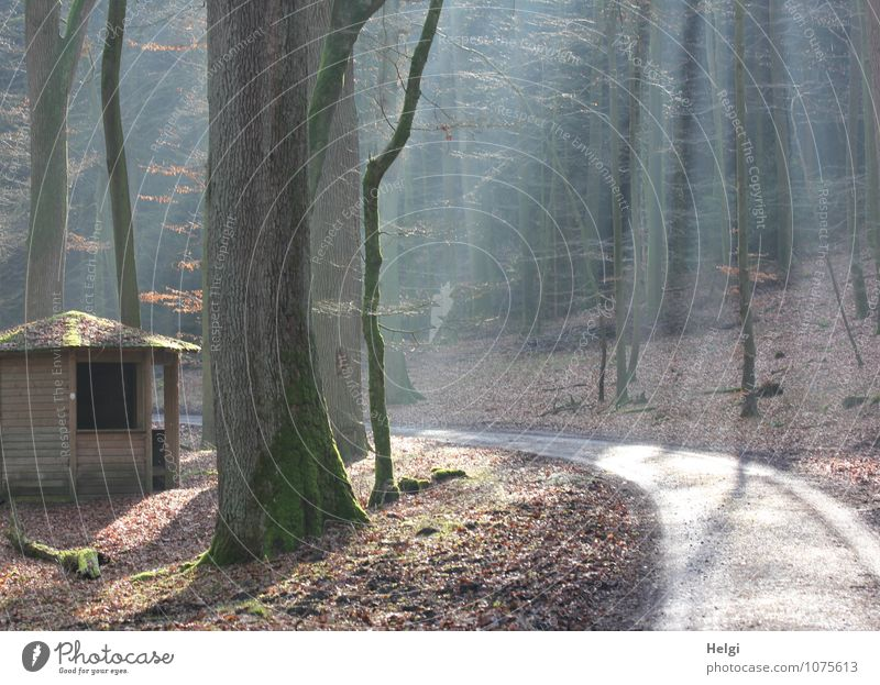 the cabin in the forest... Environment Nature Landscape Plant Winter Beautiful weather Tree Forest Teutoburg Forest Hut Lanes & trails Illuminate Stand
