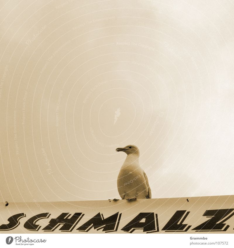 Clouds Gray Bird Seagull Delicious Meal Beak Bad weather Snack bar Poultry