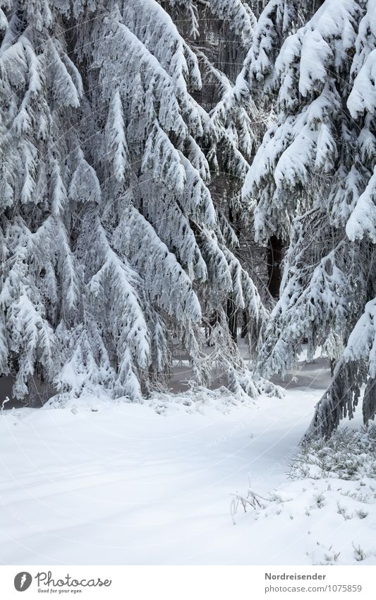 Nature White Tree Landscape Winter Forest Snow Lanes & trails Ice Weather Climate Frost Pure Freeze Stagnating Winter vacation