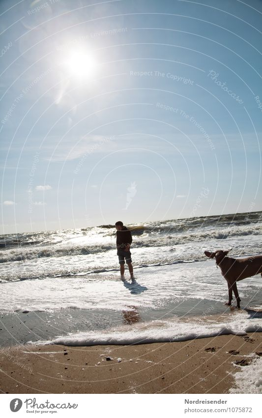 Dog Human being Youth (Young adults) Water Summer Sun Relaxation Ocean Young man Animal 18 - 30 years Beach Adults Life Freedom Swimming & Bathing