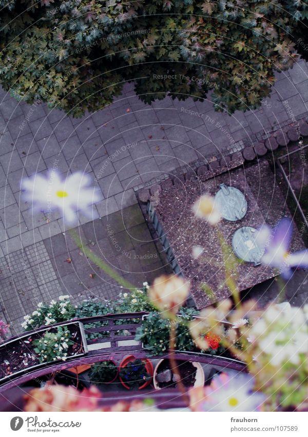 mauerBLÜMCHEN Flower Blossom Balcony Asphalt Green Summer Autumn Wet Muddled Beautiful Blue steep Cobblestones waste bin lid Rain Wild animal Free Pride
