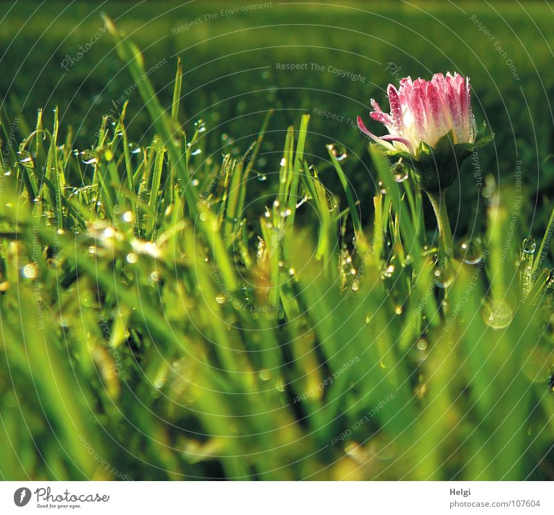 White Green Red Flower Yellow Dark Meadow Autumn Grass Lamp Bright Glittering Pink Wet Drops of water Stand