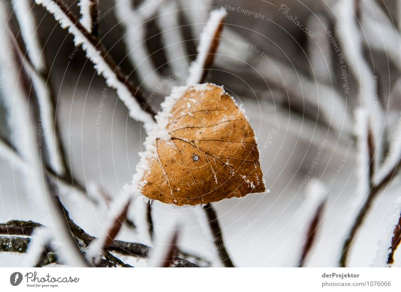 A leaf has held out before Vacation & Travel Tourism Trip Snow Winter vacation Mountain Environment Nature Plant Beautiful weather Ice Frost Leaf Hill Emotions