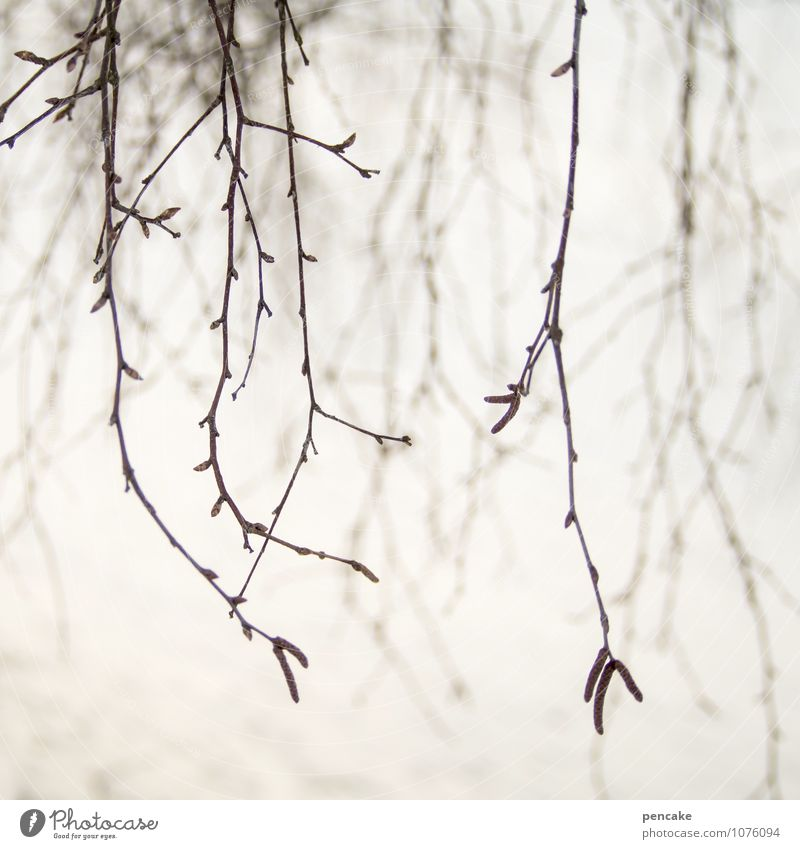 reiterativeness Nature Spring Winter Fog Snow Tree Sign Near Feminine Bizarre Life Calm Twigs and branches Superimposed Suspended Longing Repeating Blur