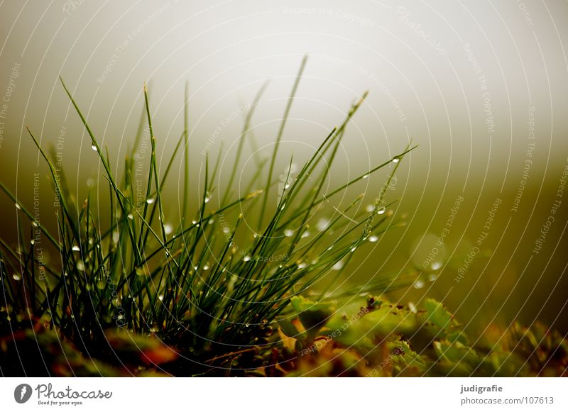 Meadow, in the morning Grass Fog Growth Green Stalk Soft Delicate Environment Plant Autumn Morning Fresh Wet Colour Nature Drops of water Rope Water