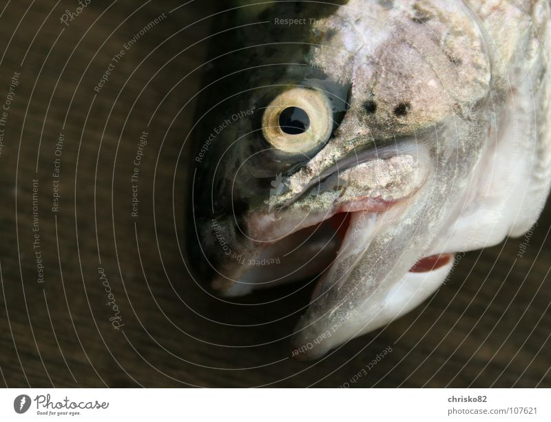 Eyes Death Lake Leisure and hobbies Fish River Set of teeth Delicious Fishing (Angle) Pond Smoothness Lure Brook Barn Rainbow Pull