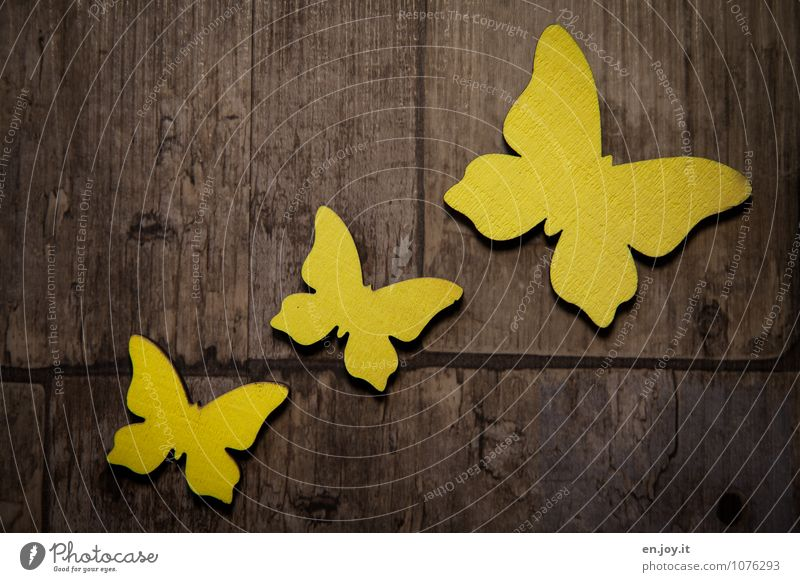 trajectory Mother's Day Birthday Spring Butterfly 3 Animal Wood Flying Friendliness Happiness Beautiful Brown Yellow Joy Happy Joie de vivre (Vitality)