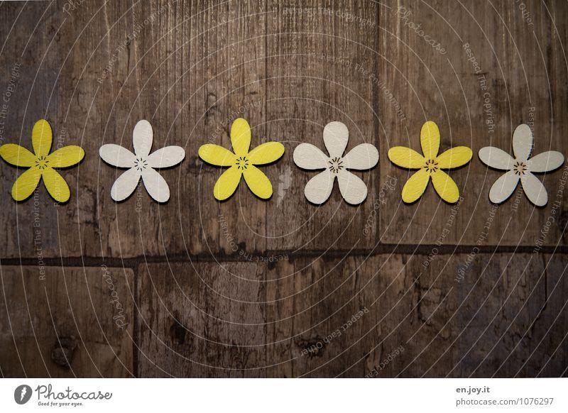 Beautiful White Summer Flower Joy Yellow Love Spring Blossom Wood Feasts & Celebrations Brown Birthday Happiness Joie de vivre (Vitality) Romance
