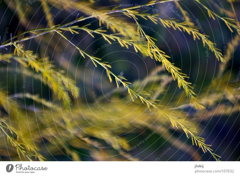 Nature Beautiful Plant Yellow Cold Dark Autumn Movement Grass Field Wind Growth Bushes Soft Violet Delicate