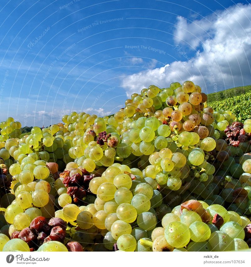 Sky Blue Green Clouds Yellow Autumn Fruit Glass Gold Beautiful weather Round Vine Harvest Fluid Sphere Bottle
