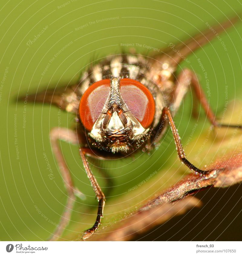 Nature Green Red Black Animal Legs Fly Animal face Wing Macro (Extreme close-up) Insect Easy Disgust Hover Appearance Frontal