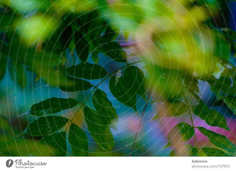Blue Green Tree Plant Summer Leaf Garden Bushes Violet Ivy