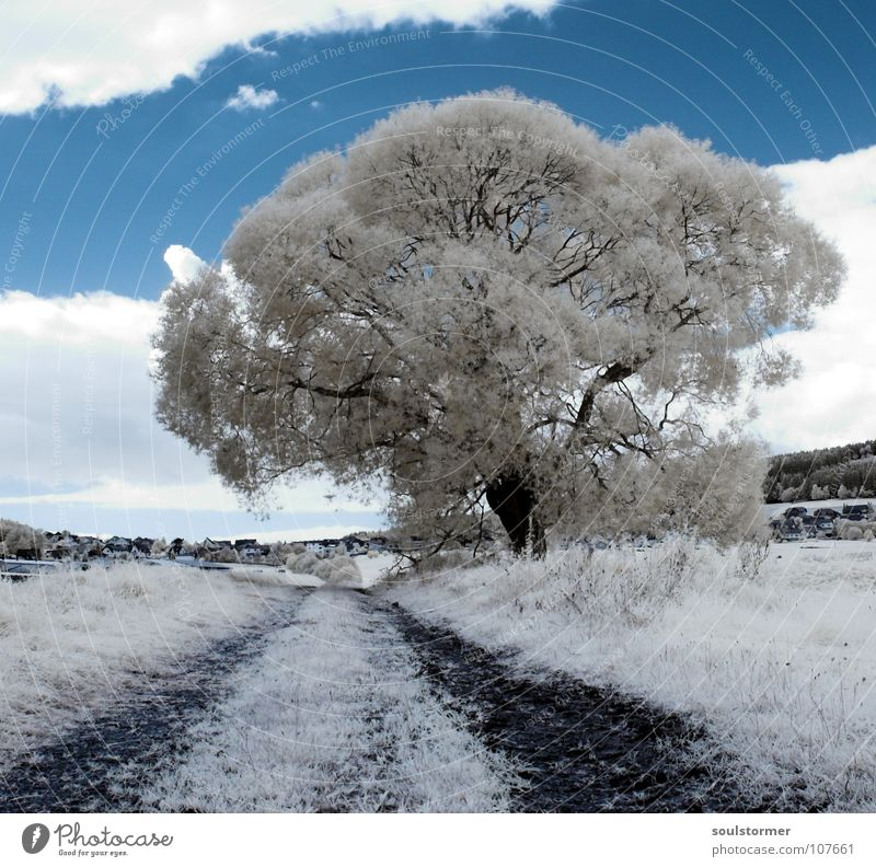 A new tree Passenger train Infrared Infrared color Tree Wood flour Clouds Grass Mountain range Hill Leaf White Gray Black Sky Surrealism False coloured