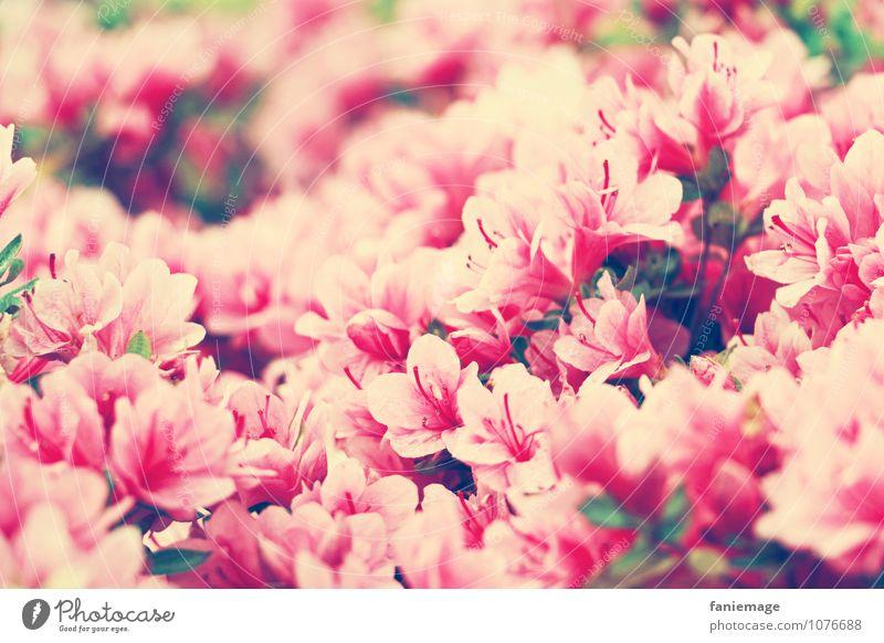 j'aime les fleurs.................................................................................................................... Environment Nature Plant