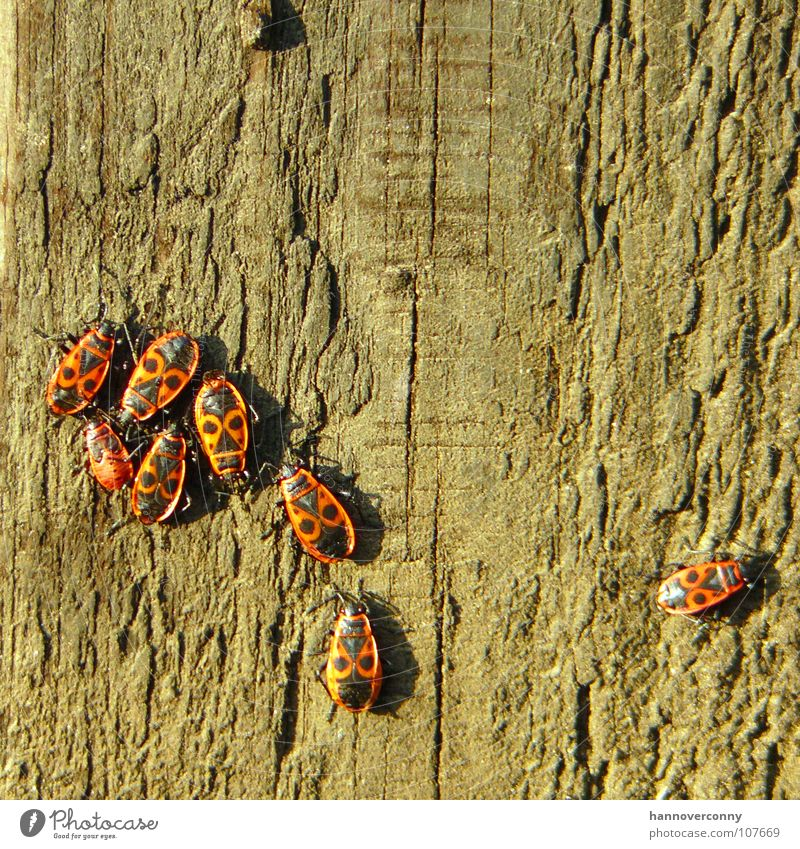 Tree Loneliness Wood Sadness Grief Multiple Insect Distress Beetle Pole Tree bark Perspire Exclusion Isopod Firebug