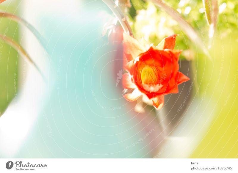 flourishing development Flower Cactus flower Blossom Blossoming Red Green Shallow depth of field Blur