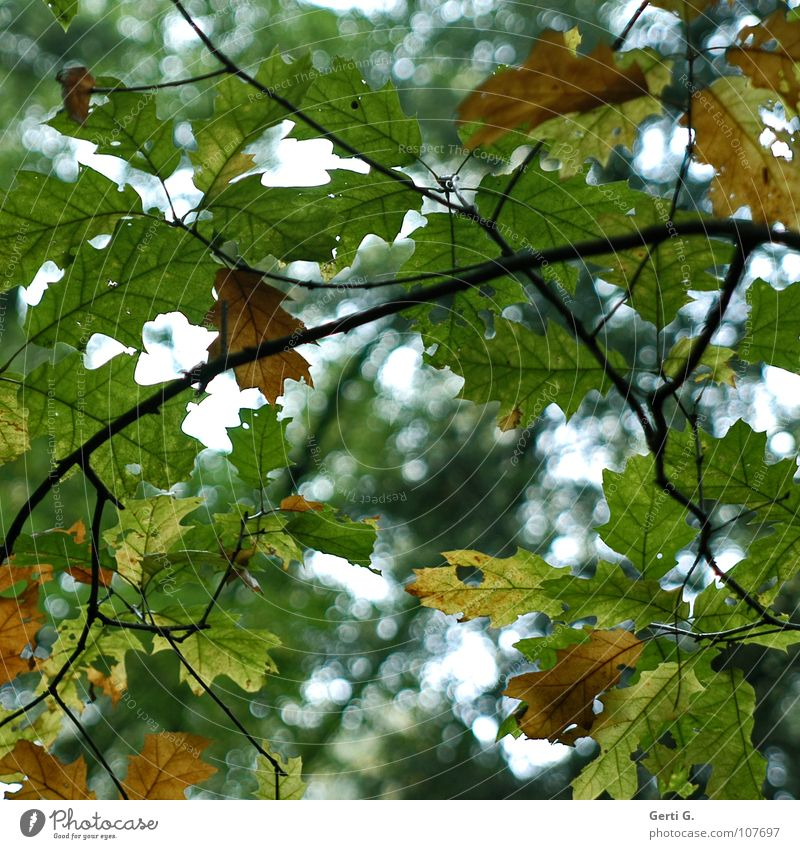change of colour Autumn Seasons Leaf Multicoloured Green Brown Tree Insight Vista Delicate Hollow Looking Transparent Moody Point of light Yellow Transience