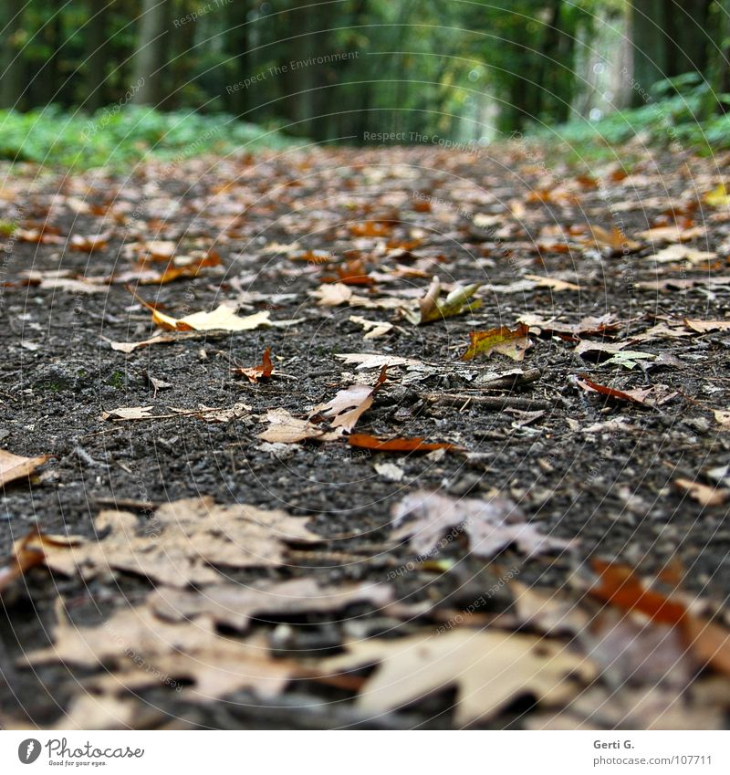 Green Leaf Forest Autumn Lanes & trails Dirty Hiking Fresh Perspective Floor covering To fall Hill Wild animal Seasons Footpath Gravel