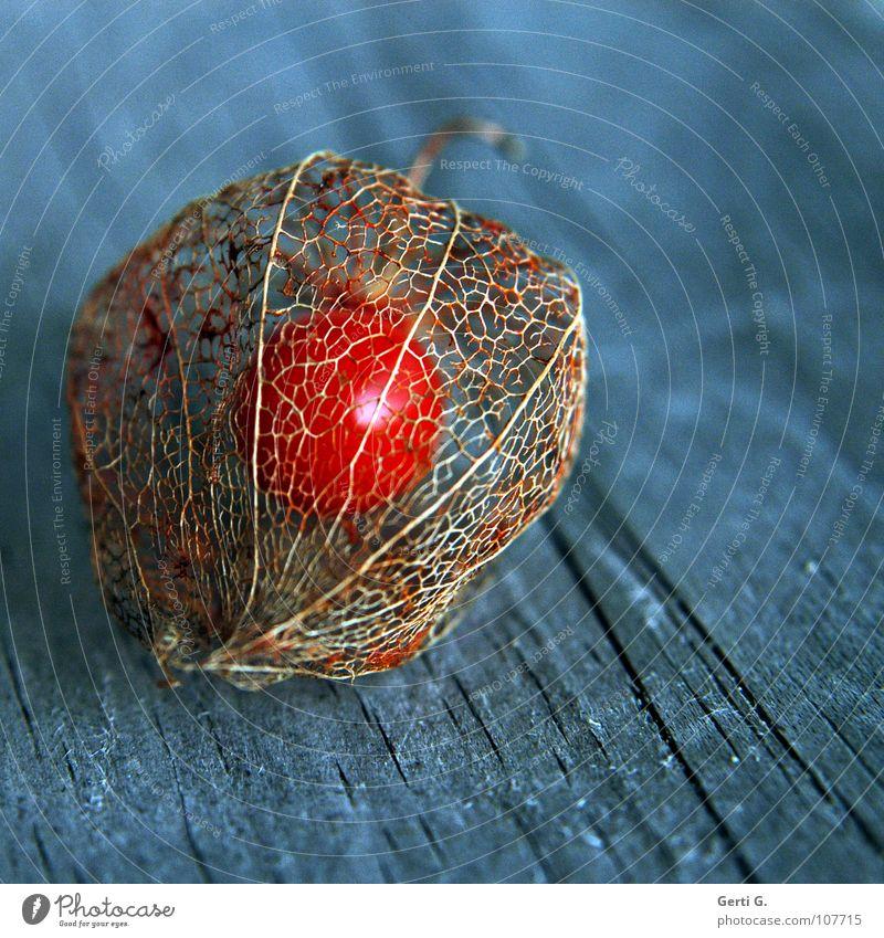 Blue Autumn Wood Orange Fruit Glittering Crazy Transience Net Protection Stalk Seed Interlaced Sheath Wood grain Flashy
