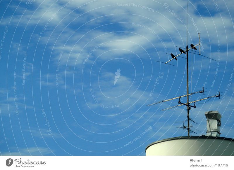 Guys, how's the reception? Bird Antenna Building House (Residential Structure) Frequency Satellite Break Relaxation Stop Rod Wind Calm Time Television