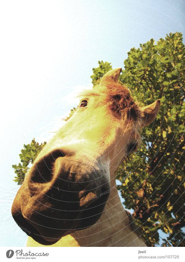 Is there anything to eat? Horse Tree Light Curiosity Worm's-eye view Grass Leaf Nostril Mane Heavy Large Horse's head Tree trunk Walking Summer Physics Feeding