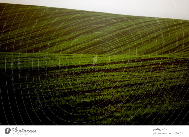 Green Colour Line Brown Field Waves Fog Earth Floor covering Hill Agriculture Harvest Sowing