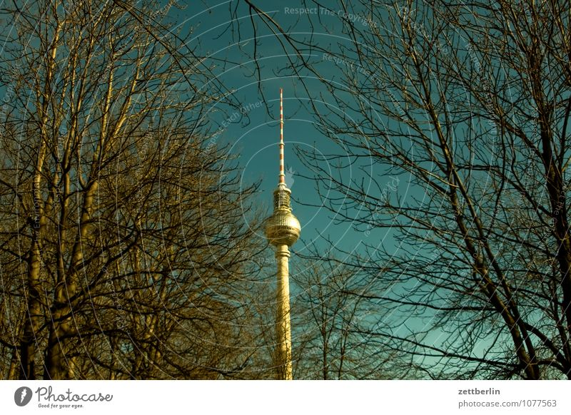 365 Berlin Capital city Berlin TV Tower Television tower Radio technology Alexanderplatz Downtown Town Spring Tree Tree trunk Branch Twig Sky Copy Space Germany