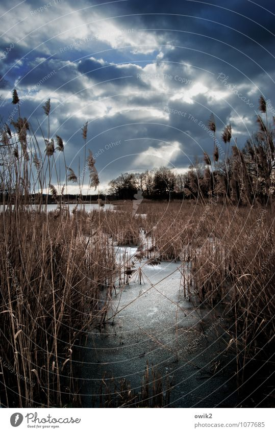 Quiet and cold Environment Nature Landscape Plant Sky Clouds Horizon Winter Ice Frost Tree Bushes Reeds Wait Cold Calm Idyll Far-off places Colour photo