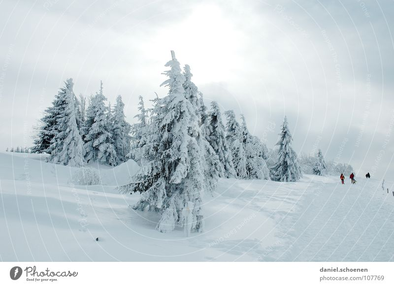 Vacation & Travel White Tree Landscape Winter Snow Gray Leisure and hobbies Hiking Trip To go for a walk Mysterious Upward Fir tree Promenade Snowscape