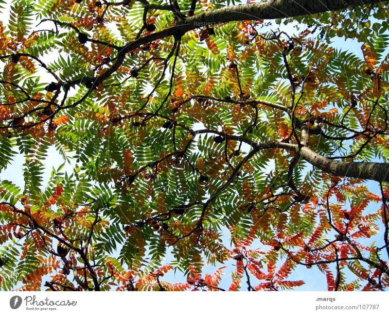 discolouration Tree Leaf Round Oval Autumn Red Green Blossom Play of colours Colouring Wood flour Nature Beautiful leaf blanket Branch Twig Orange Shadow Sky