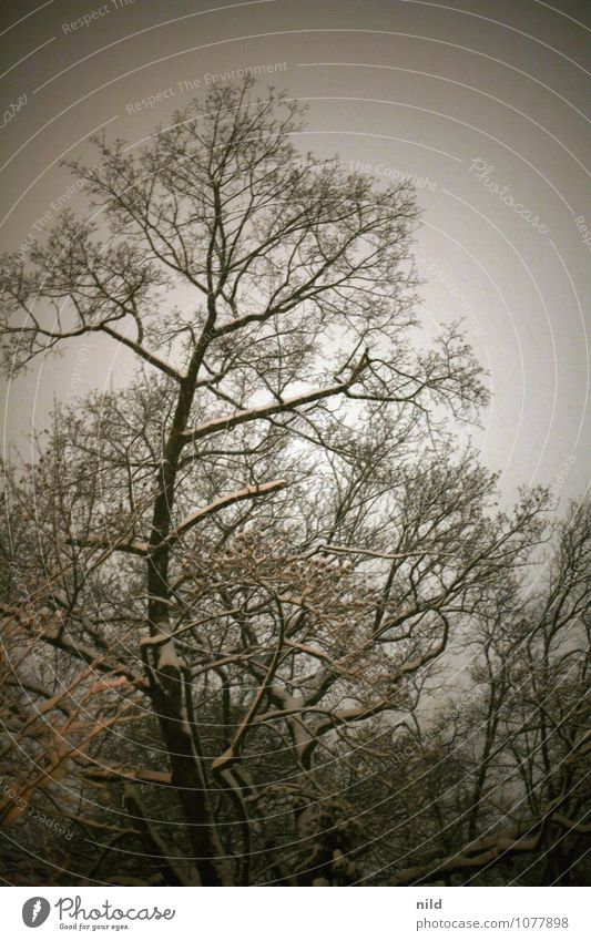 out and about at night Nature Plant Sky Winter Weather Snow Snowfall Tree Park Forest Deserted Dark Cold Gloomy Gray Orange Black Bleak Colour photo