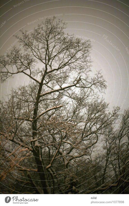 Sky Nature Plant Tree Winter Dark Black Forest Cold Snow Gray Snowfall Park Orange Weather Gloomy