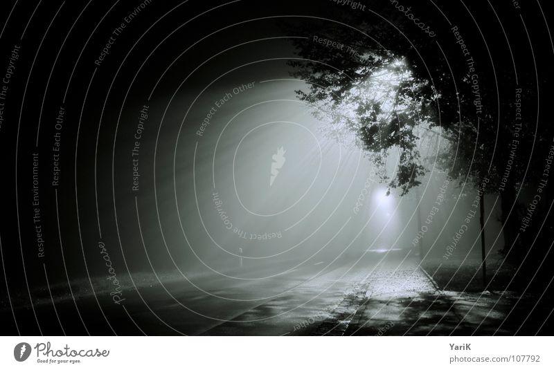 Water Tree Blue Leaf Black Loneliness Street Dark Gray Lighting Fog Wet Asphalt Branch Creepy Lantern